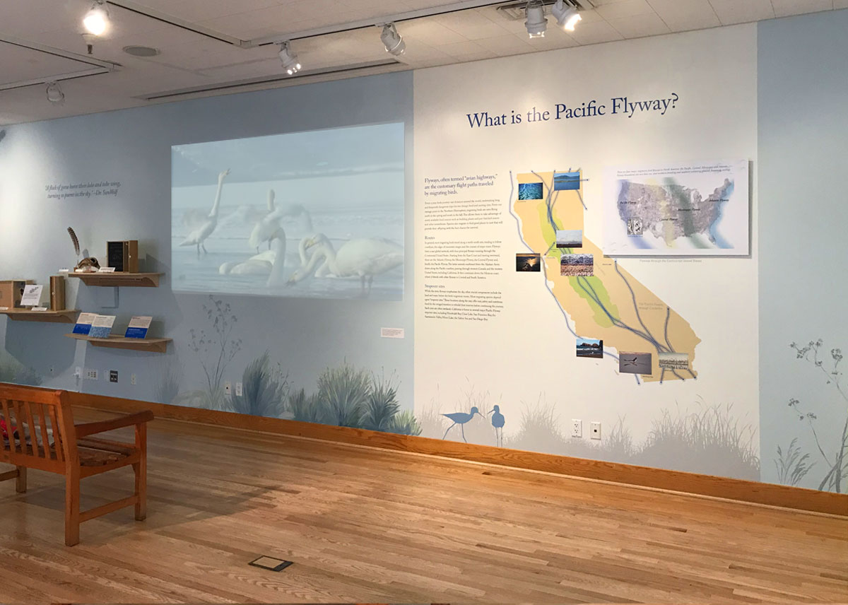 Pacific Flyway wall map